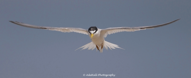 Twas a nice morn in Tuas, that took a Tern for the better…