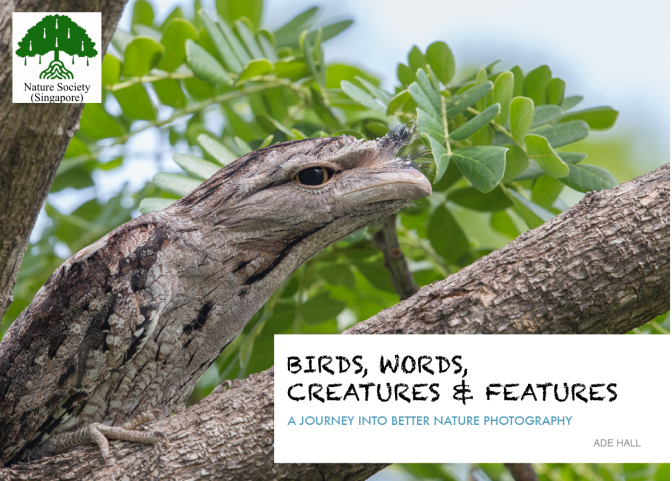 NEW BOOK made more available… Birds, Words, Creatures & Features